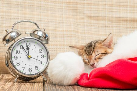 little kitty is sleeping soundly in Santa hat next to the retro alarm clock Stockfoto