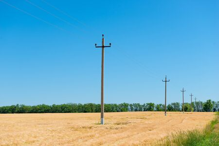 Power line in a yellow cereal field summer landscape Imagens