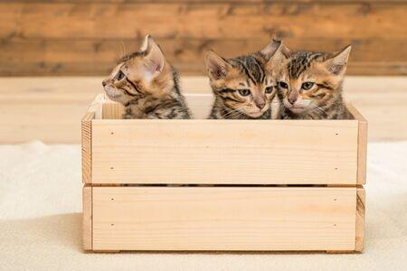 three kittens in a wooden box, closeup portrait of kittens