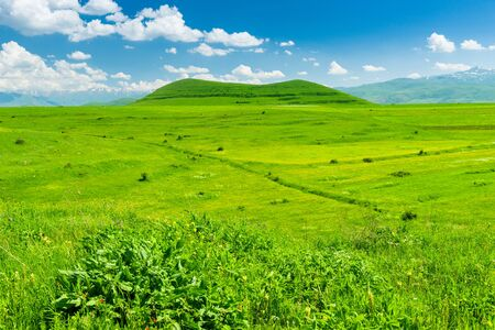 Lush green field and hill covered with grass on a sunny day landscape