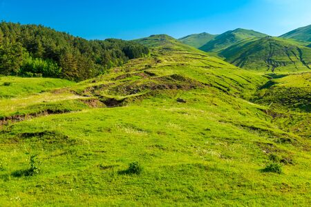 Green pastures on the slopes of the Caucasus Mountains in June, the landscape of Armenia