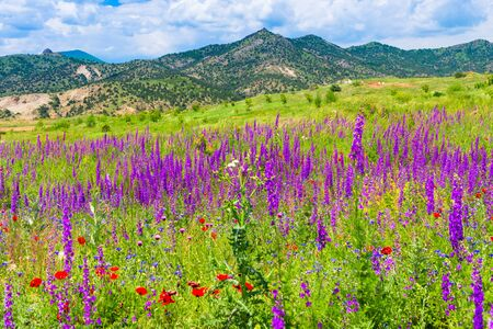 landscape of Armenia - flowering field in the mountains on a sunny summer day