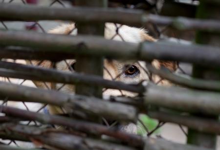 Sad dog behind a fence  photo