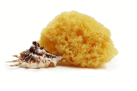 nature sponge and sea shell isolated Stock Photo