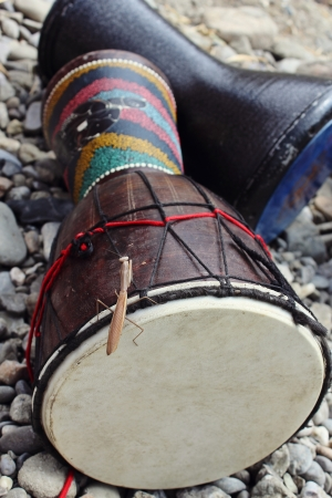 mantis is sitting on the drum djembe which is on sea stones  photo