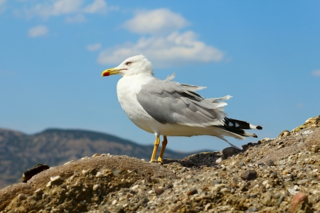 single white seagull is sitting on a rock over sea Stock Photo - 21745542