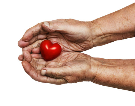 empathy: elderly woman keeping red heart in her palms isolated on white , symbol of care and love