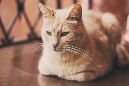 soft focus: Hermoso gato rojo est� mirando la c�mara al aire libre, enfoque suave Foto de archivo