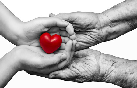 elderly adults: little girl and elderly woman keeping red heart in their palms together, isolated on white background, symbol of care and love