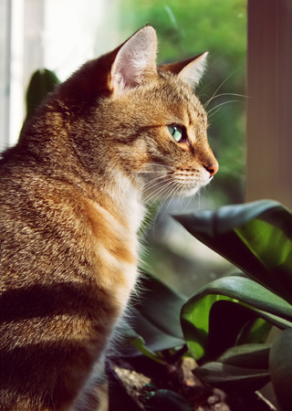 nursling: Beautiful domestic cat is sitting on a windowstool outside, close-up portrait