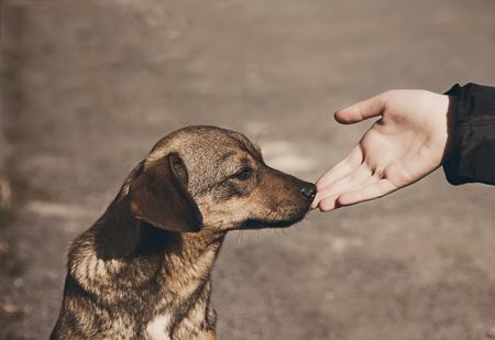 vagabundos: Ayudar a la mano del niño y perro sin hogar solitario con ojos tristes