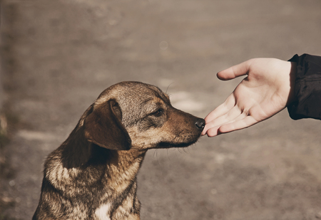 animal: Helping child hand and lonely homeless dog with sad eyes