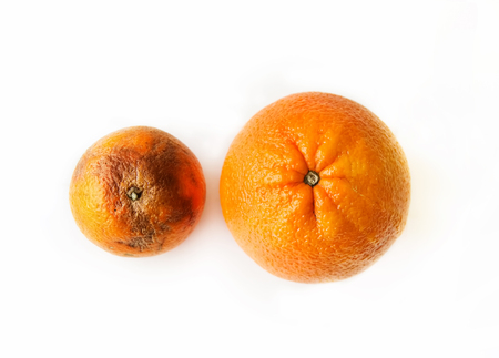 Two oranges - fresh ripe and ugly rotten, top view on white background
