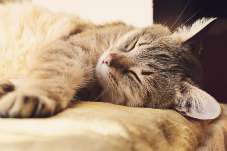 likeable: Beautiful domestic cat is sleeping on a windowstool outside, close-up portrait