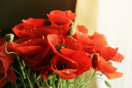 Bunch of beautiful red poppies near a window