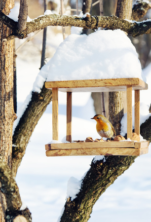 Robin (Erithacus rubecula) is sitting on handmade bird-feeder with crumbs and nuts,  winter scene
