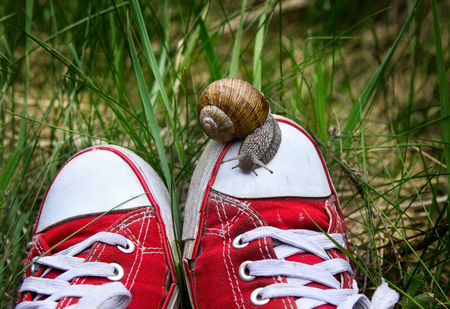 Feet in old ripped red gumshoes with big snail on top outdoors. Unity man with nature. Speed and dawdling. Stock Photo