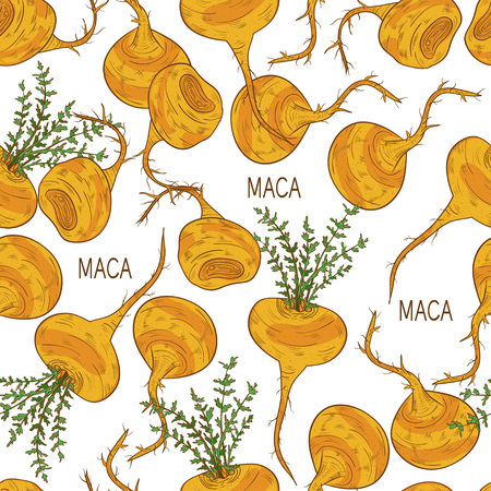 Maca seamless background in colored illustration.