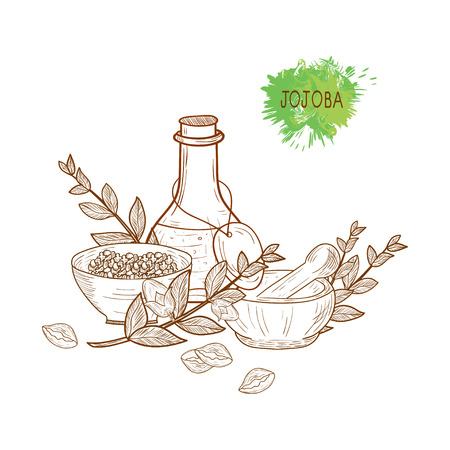 Jojoba. Branch, leaves, fruit. Capacity, flask, mortar, pestle. Set. Sketch. Monochrome. On a white background.