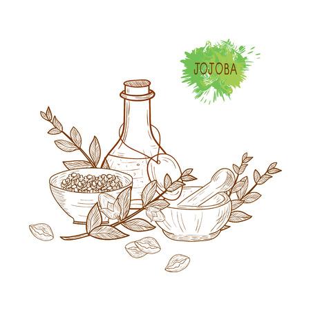 Jojoba. Branch, leaves, fruit. Capacity, flask, mortar, pestle. Set. Sketch. Monochrome. On a white background.