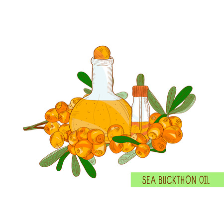 Sea buckthorn. Oil. Berries, a bottle, vial. Sketch. Color pattern.
