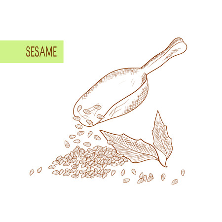 Sesame. Leaves, grain, seed. Ladle. scoop. Sketch. On a white background. Monochrome.