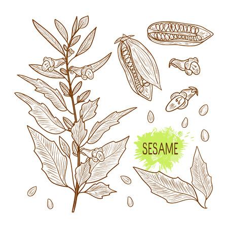 Conjunto de dibujos de planta de sésamo en color monocromático. Ilustración de vector