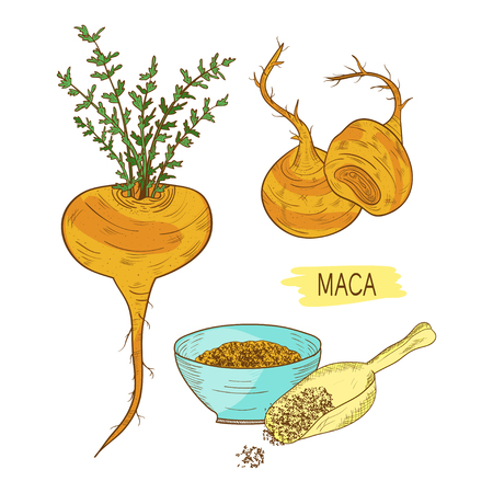 Maca. Tuber. Powder. Sketch. Color pattern.