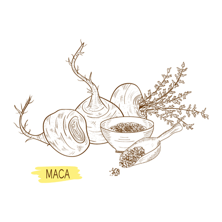 Maca. Tuber. Powder. Sketch. Monochrome