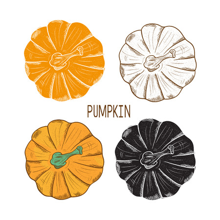 Pumpkin. Set. Orange, black, silhouette, outline. Sketch