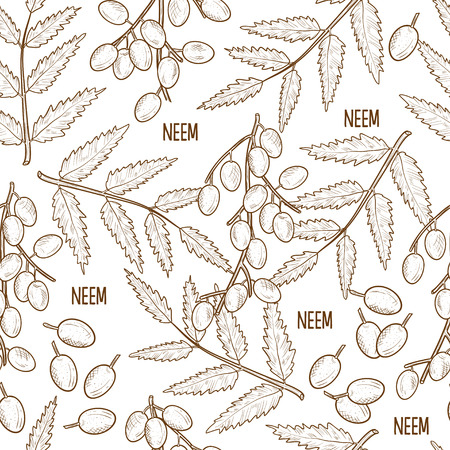 Neem sketch of its Leaves and fruits in Monochrome Background