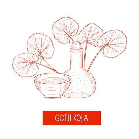 Gotu kola. A plant, a bottle and a bowl. Sketch. Monochrome. On a white background. Illustration
