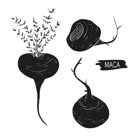 Maca. Leaves, root. fetus. Black silhouette on white background. Set. Ilustração