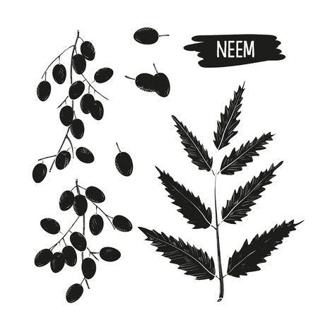 Neem leaves, fruit, root, bowl. Monochrome, set. Silhouette, black drawing on a white background.