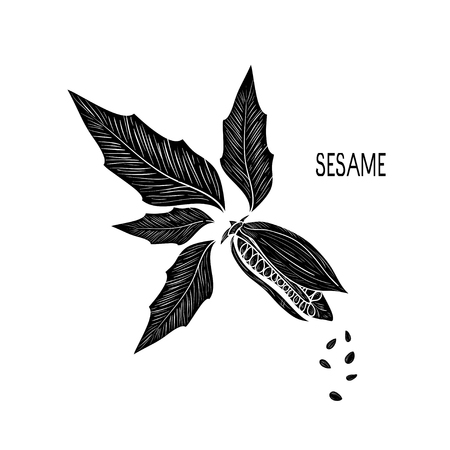 sesame plant with seeds and label, vector illustration on white background. Vettoriali
