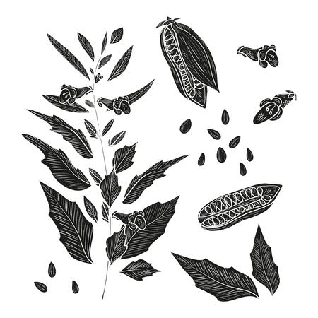 Sesame. Plant. Fetus. Seed. Leaves. Sketch. Set. Monochrome. Silhouette
