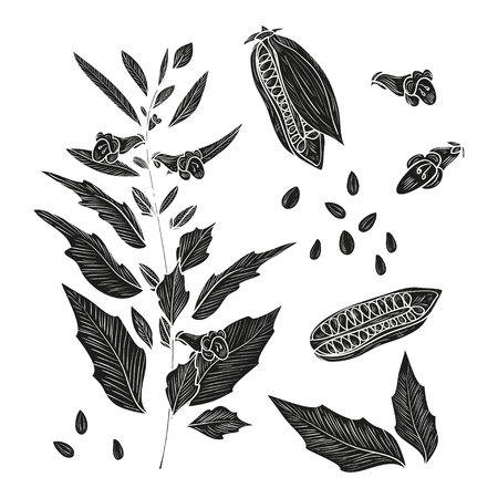 Sesame. Plant. Fetus. Seed. Leaves. Sketch. Set. Monochrome. Silhouette