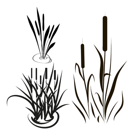 Bulrush, sedge. Set. Silhouette. Black picture.