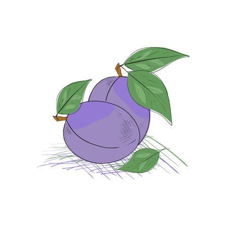 Prunes. Sketch. On a white background.