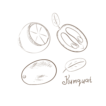 Kumquat. Sketch. Tone images on a white background. Set.