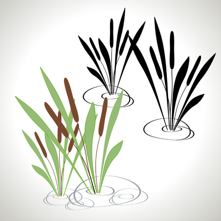 Bulrush silhouette - color, black and white Illustration