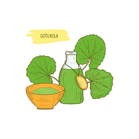 Gotu kola, скетч. Leaves, tincture, powder. Color picture
