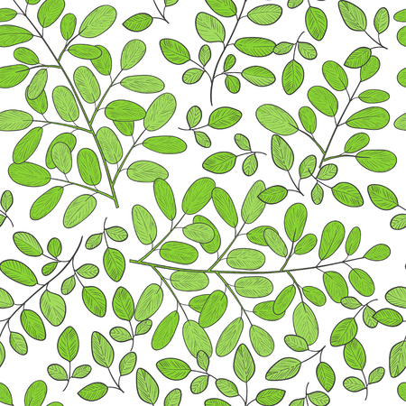 Moringa. Background, wallpaper, seamless. Sketch. Color pattern Illustration