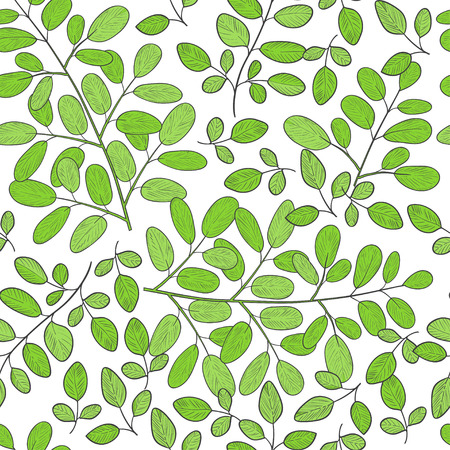 Moringa. Background, wallpaper, seamless. Sketch. Color pattern Stock Photo