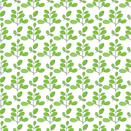 Moringa. Green leaves, branches. Background, wallpaper, seamless. Sketch. Illustration