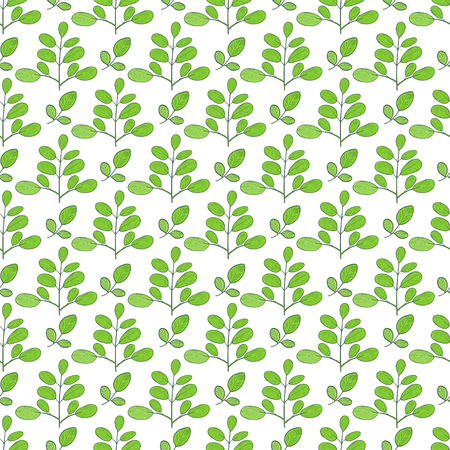 Moringa. Green leaves, branches. Background, wallpaper, seamless. Sketch. Stock Photo