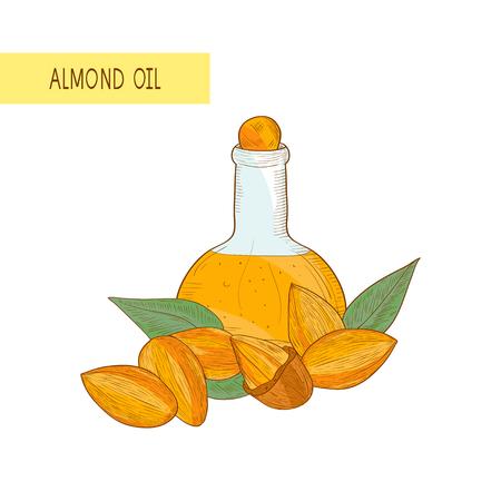 Almond. Grain, oil. Sketch. Color pattern. Archivio Fotografico