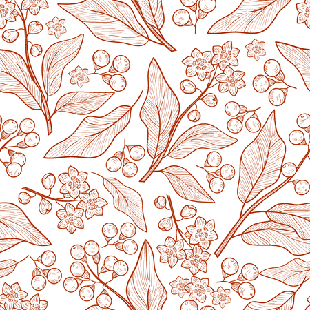 Camphor. Plant. Leaves, fruit. Background, wallpaper, seamless. Sketch. Monochrome Stock Photo
