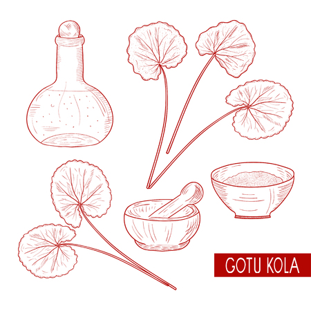 Gotu kola. Set. Plant. A bottle, a bowl, a mortar. Sketch. Monophonic