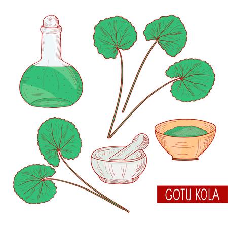Gotu kola. Set. Plant. A bottle, a bowl, a mortar. Sketch. On a white background.
